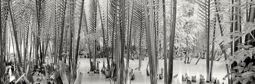 Mangrove-Stalks.jpg