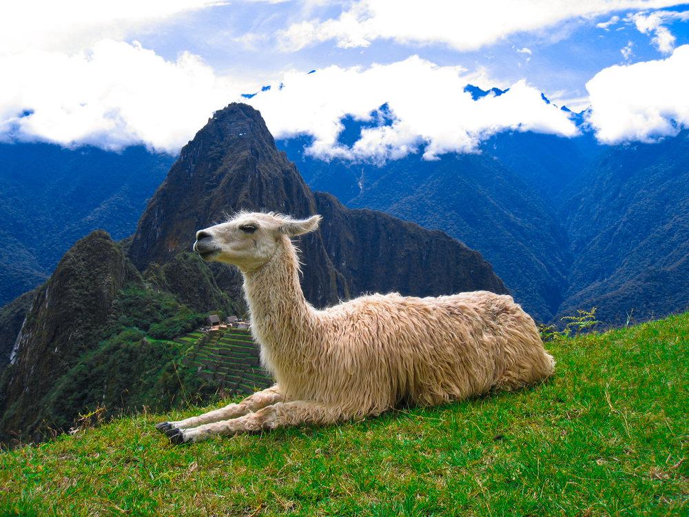 Machu_Picchu_Llama_2.jpg