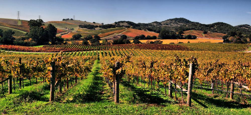 Vineyards_in_Napa_Valley.jpg
