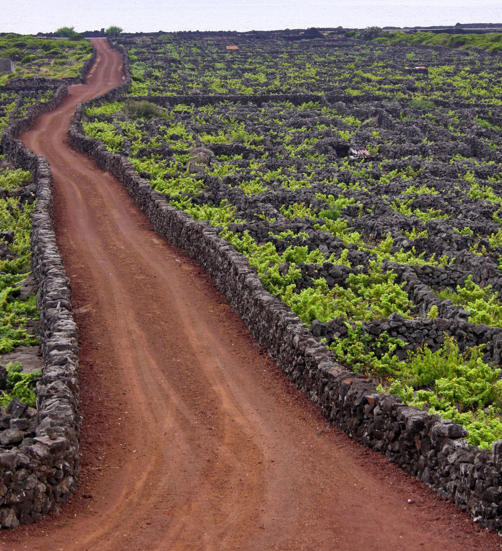 Vineyards_in_the_Azores_with_rock_walls_to_protect_vines.jpg