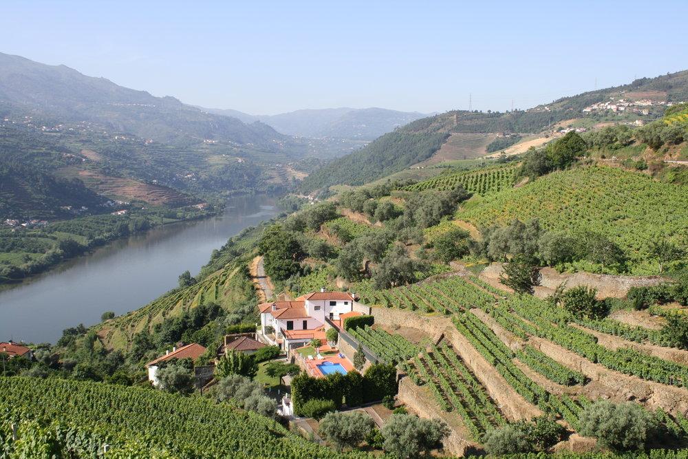 Vallée_du_Douro_-_vignoble_de_porto.JPG