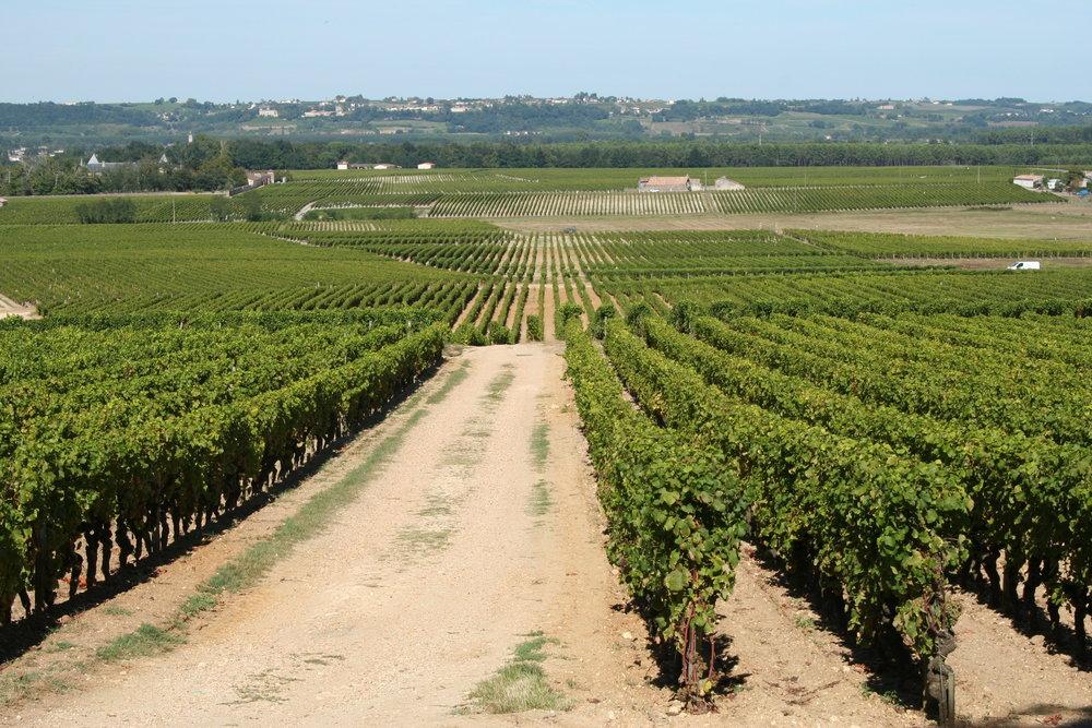 Vineyards_of_Château_d%u2019Yquem,_Sauternes.jpg