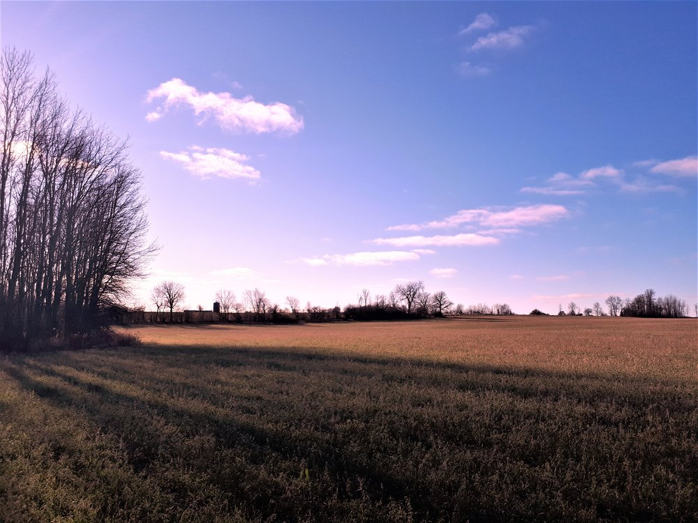 "The ""very back"" field in the slanted November light. The barn and silo are on the horizon."