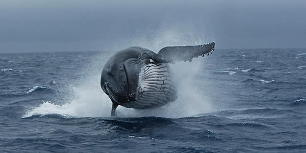 Albany Whale Watching Tours