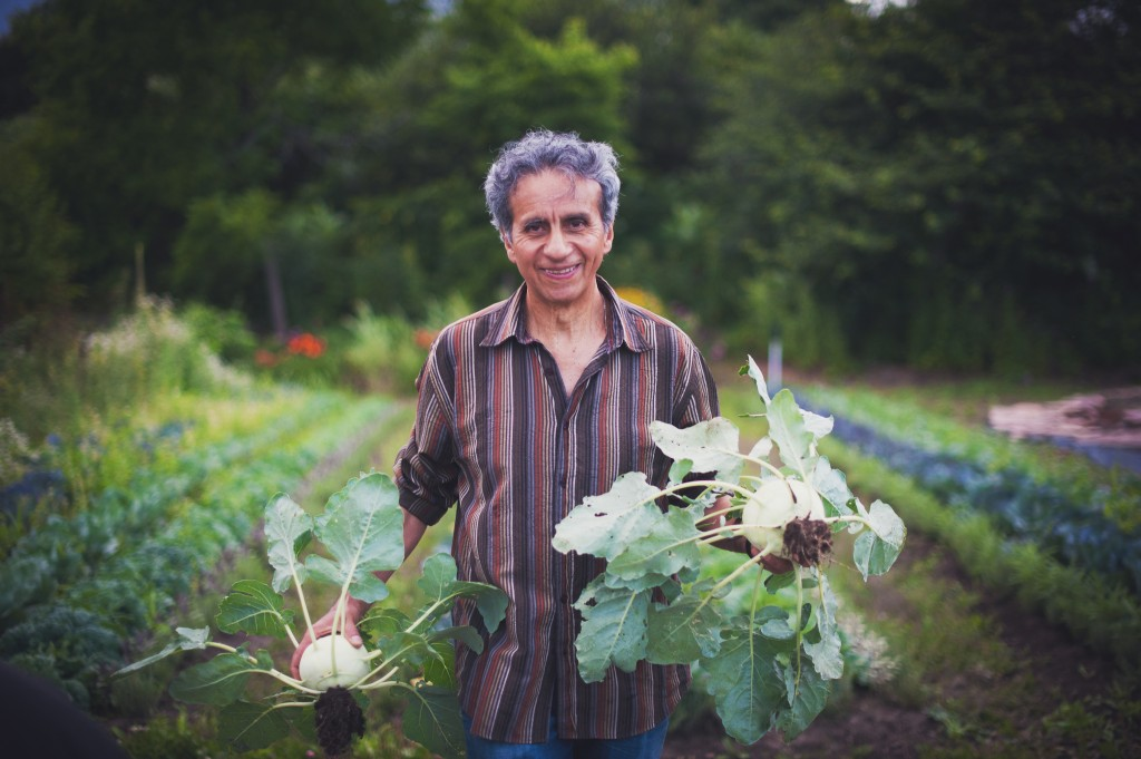 man-vegetable-harvest-gardening-kohlrabi-montreal-botanical-garden