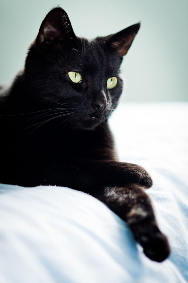 black-cat-montreal-photographer