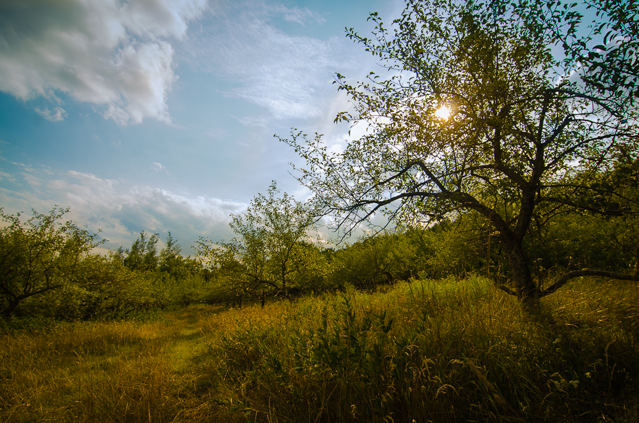 field-apple-orchard-sun-montreal-fieldwork-photographer