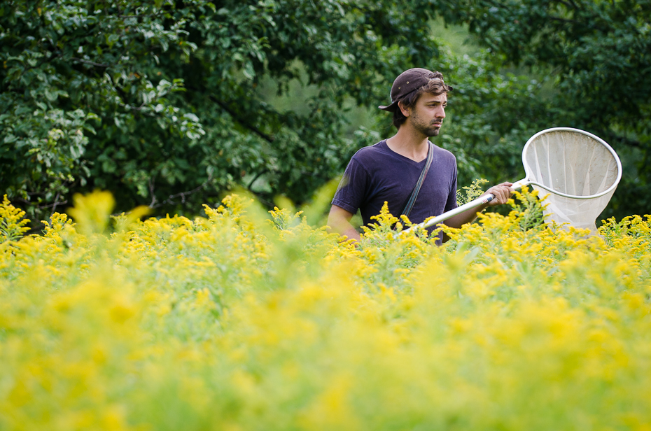 portrait-scientist-grad-student-Kyle Martins-sampling-bees-goldenrods-Montreal-research-photographer