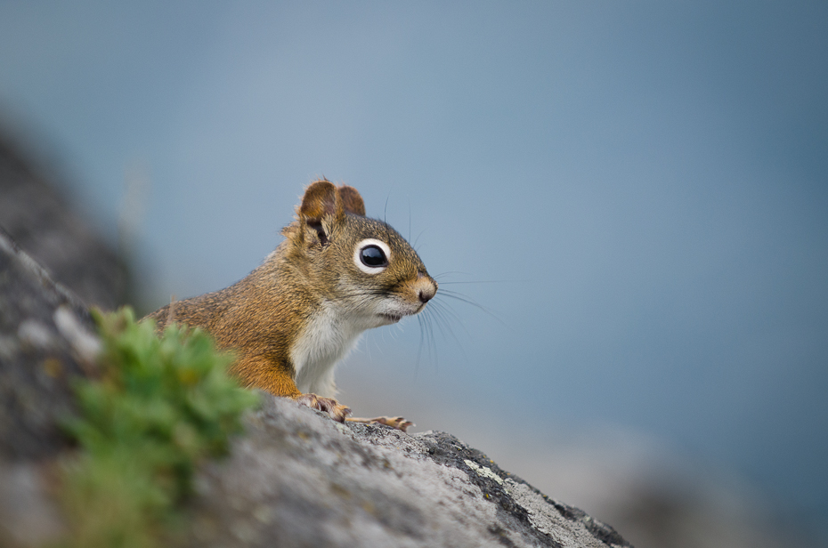 field-work-photographer-red-squirrel-mountain-view
