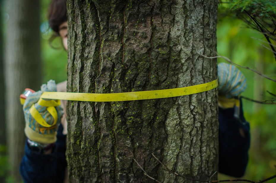 McGill-carly ziter-tree-hugging-scientist-forest-montreal-research-field-photographer