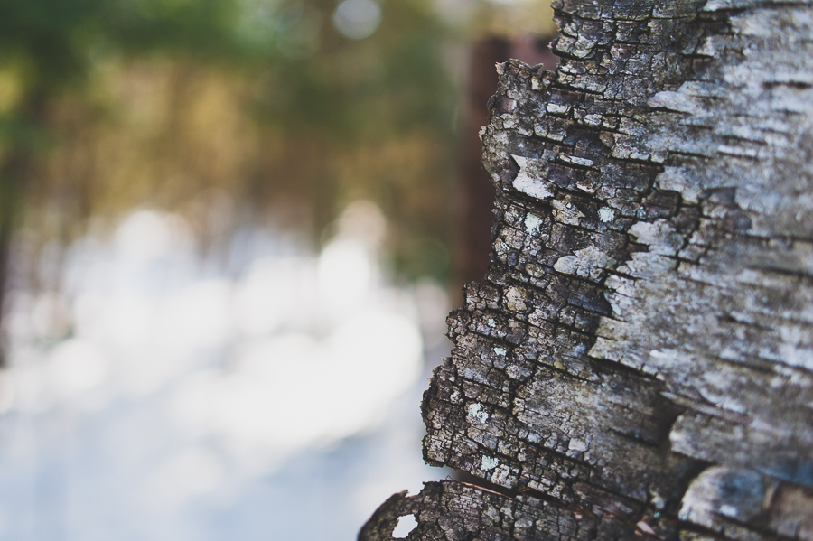 bark-tree-details-winter-snow