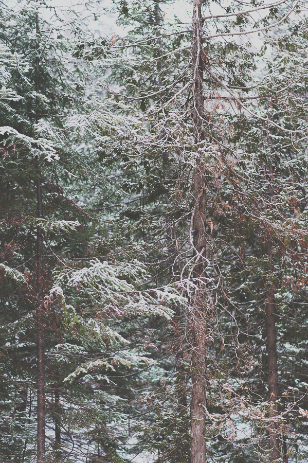 nature-winter-snow-forest-outdoor-montreal-photographer