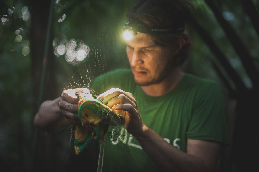wouter-halfwerk-scientist-headlamp-catching-bat-mist-net-field-science-photographer