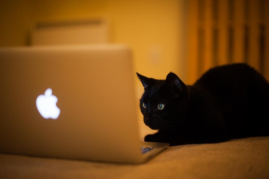 20131228122931-Cat