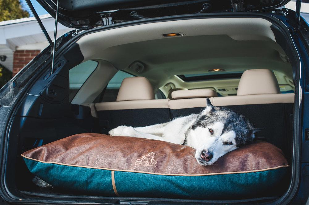 husky-on-dog-bed-in-car
