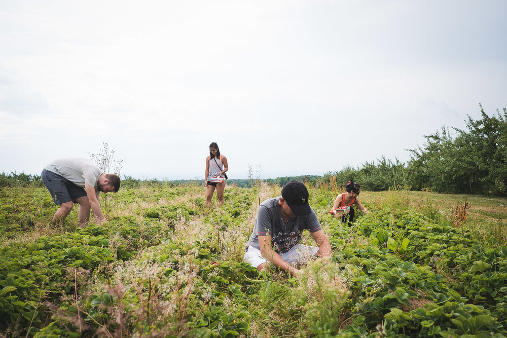 family-strawberry-picking-orleans-island-quebec