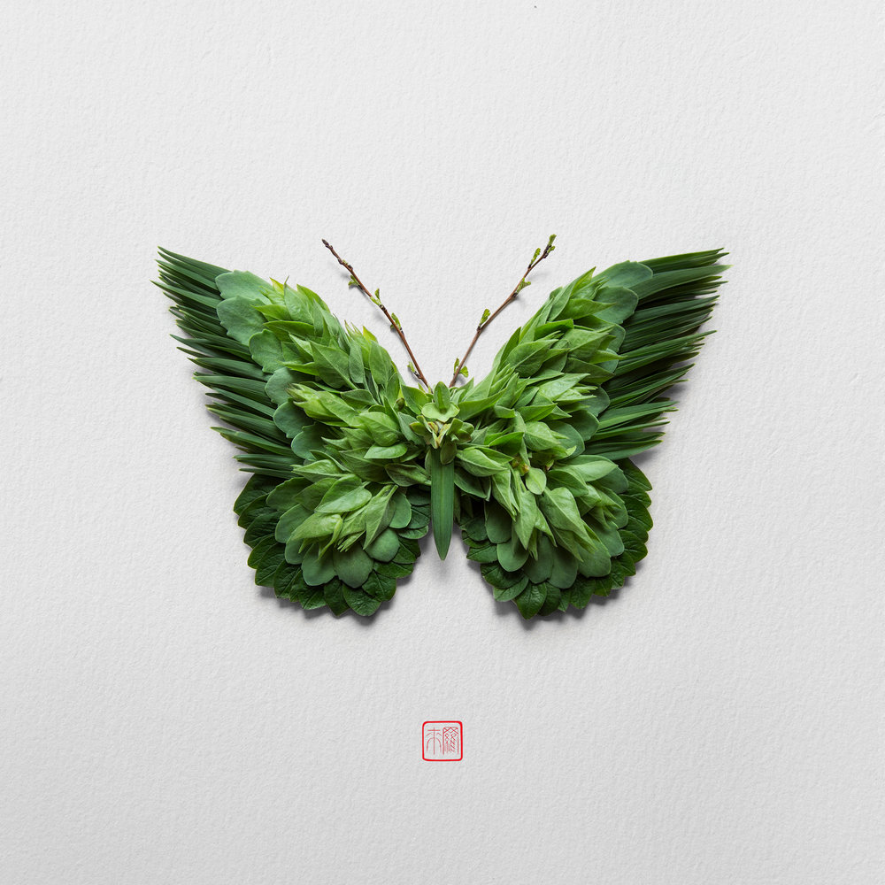 green-monarch-raku-inoue-natura-insects