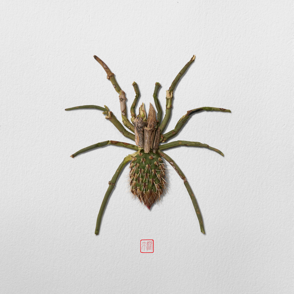 tarantula-glen-canyon-by-raku-inoue