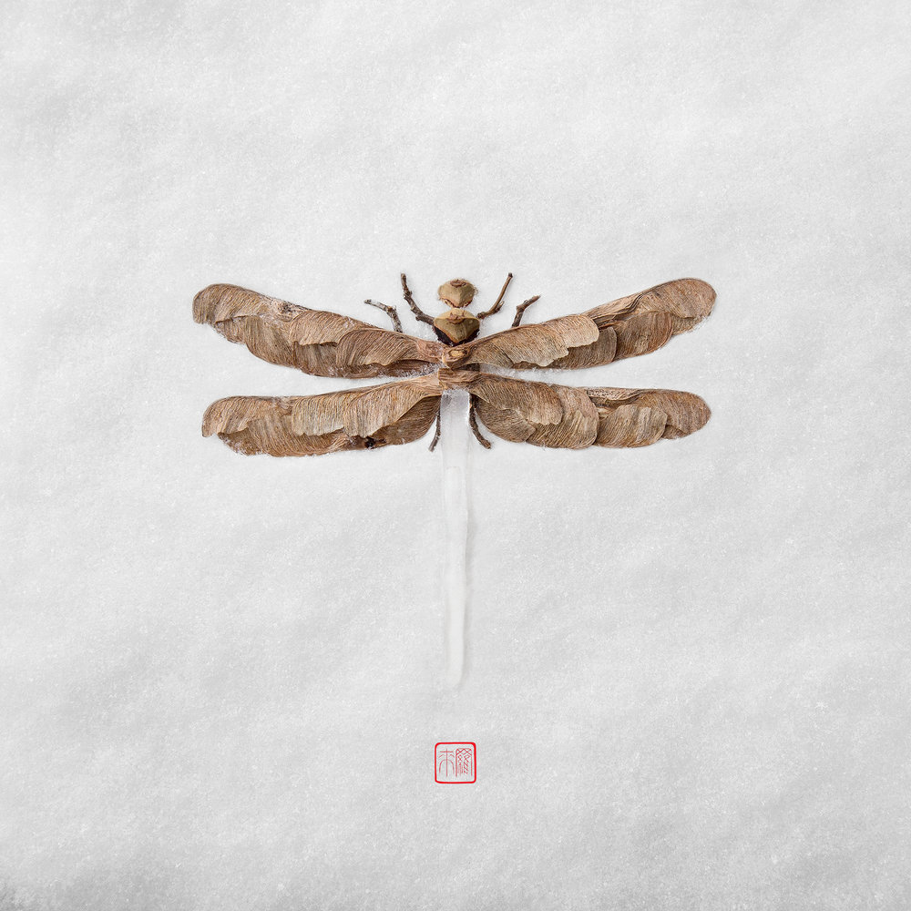 dragonfly-icicle-raku-inoue