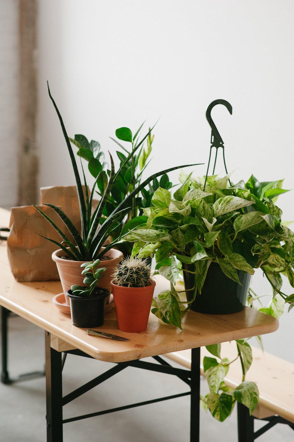 plants-by-jungle-fleur