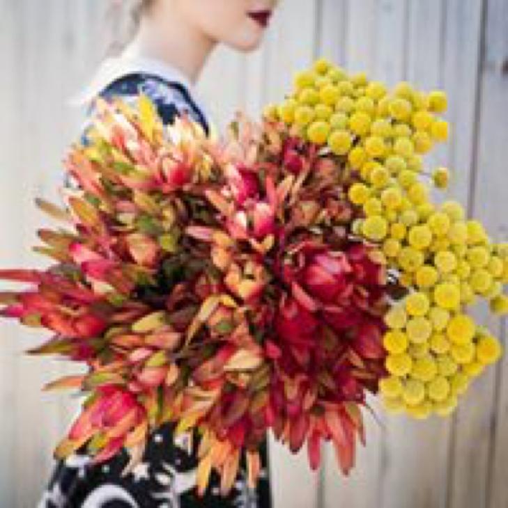 Malpara Florist