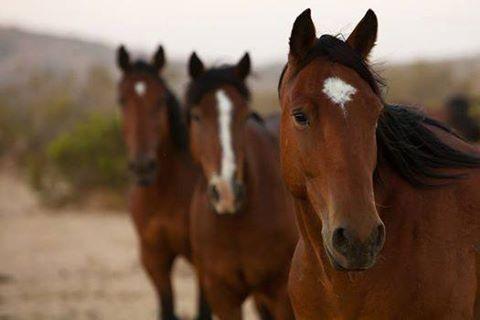 3-horses.jpg