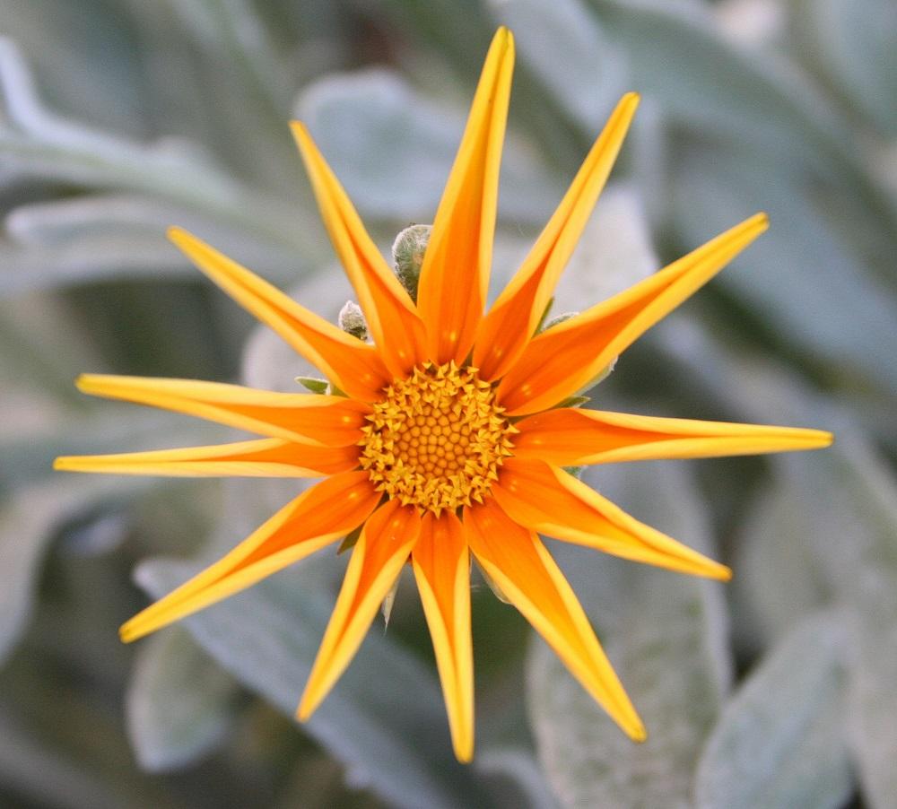 996 flowers -  1.jpg