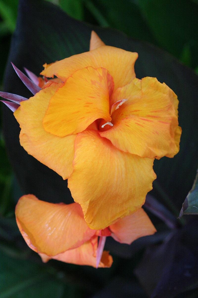 996 flowers -  65.jpg