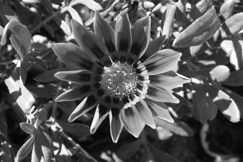 996 flowers -  137.jpg