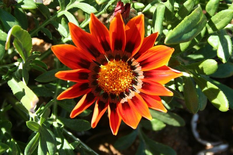 996 flowers -  139.jpg