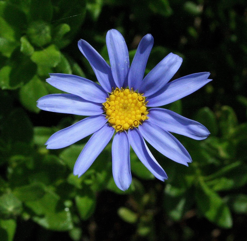 IMG_5384 crop.jpg