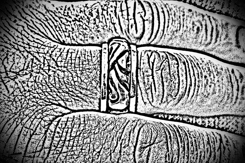 IMG_6737 photocopy.jpg
