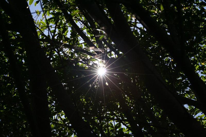 Sun thru trees.jpg