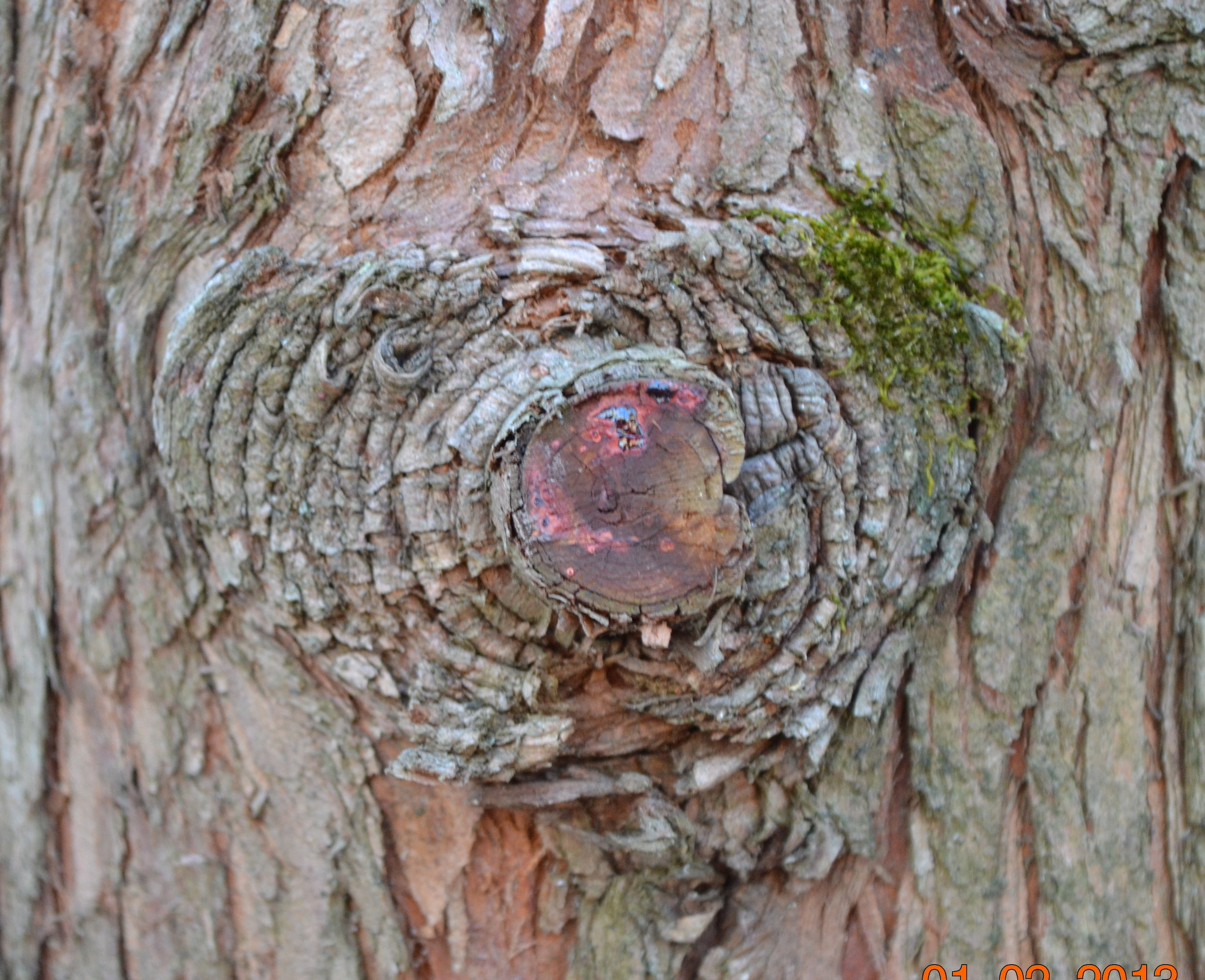 Dawn Redwood Bark Heart