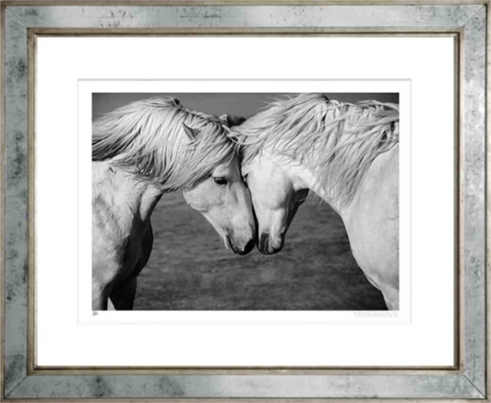 Newmarket Horses
