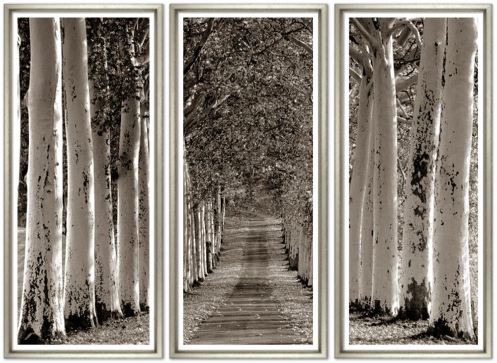 Avenue of Trees