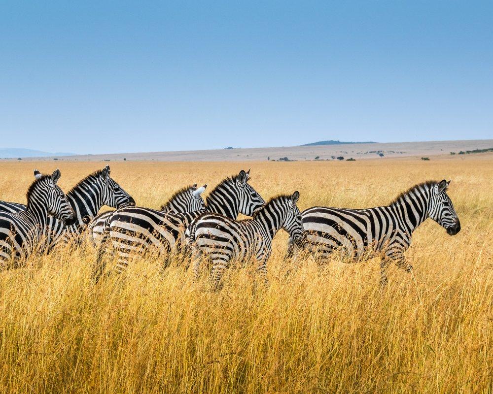 masai mara + seychelles -