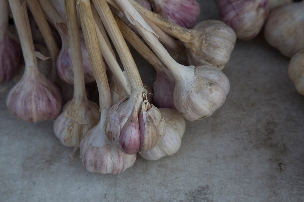 Garlic 24-105mm lens, 1/500, f8, ISO 400