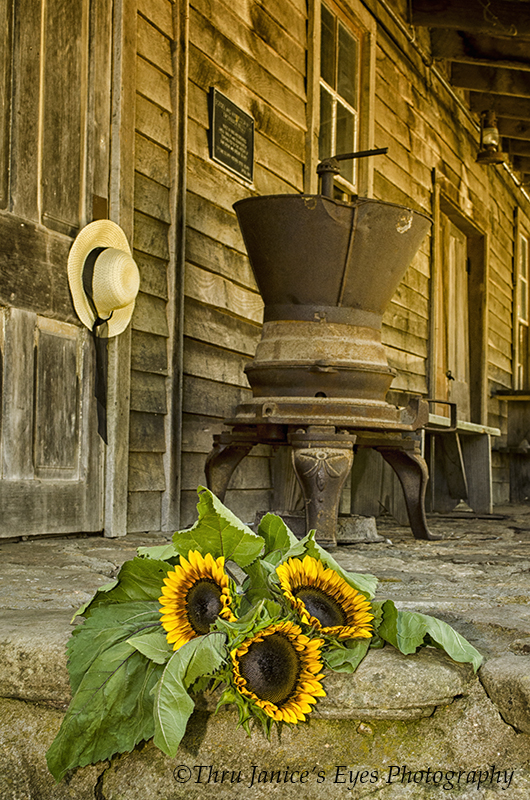 SunflowersWommackMill071617WEB.jpg