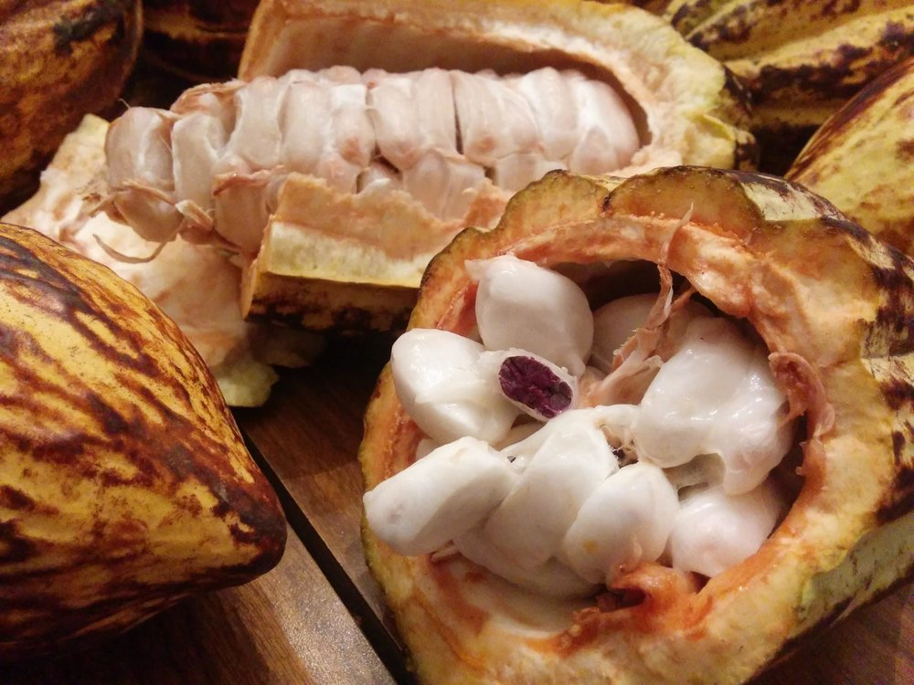 This is what the inside of a Cocoa pods looks like, the fruit kind tastes like a litchi or a baobab fruit