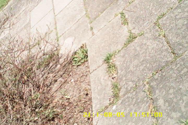 birdcam experiment_03.png