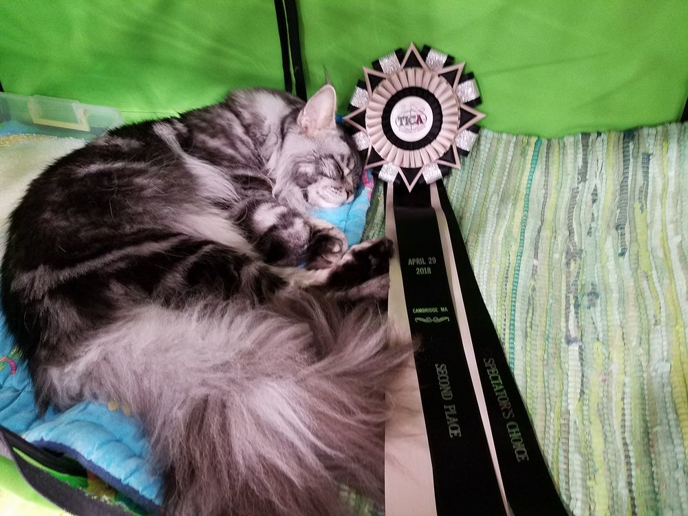 Dracoonfly Prince Fergus takes a nap with his ribbon