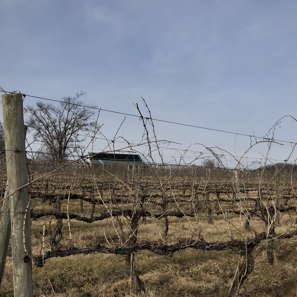 <p><strong>Cardinal Point Winery</strong><a href=/cardinalpoint>Learn More →</a></p>