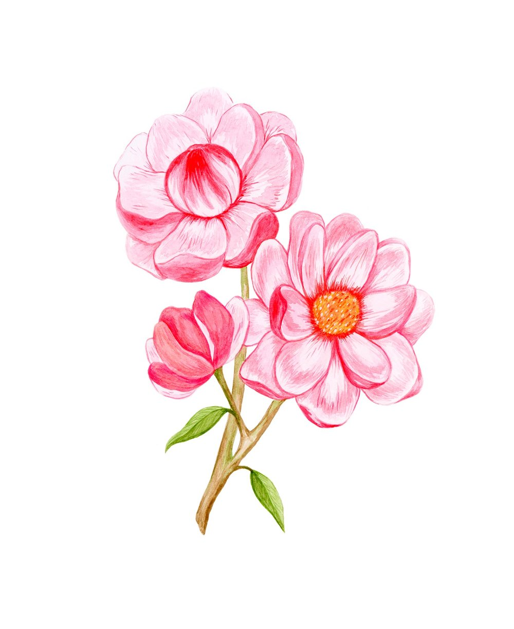 emily-rose-artist--flowers--painting--watercolour--observations.jpg