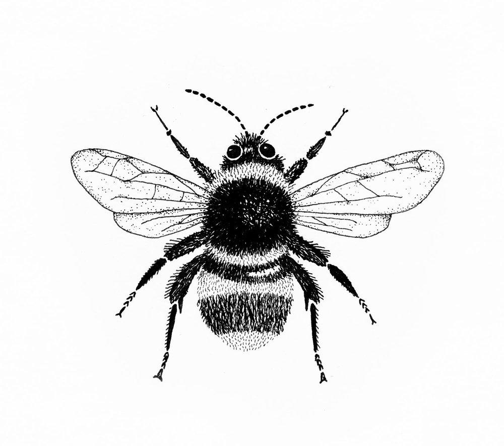 emily-rose-artist--bee--pen--drawing--observations.jpg