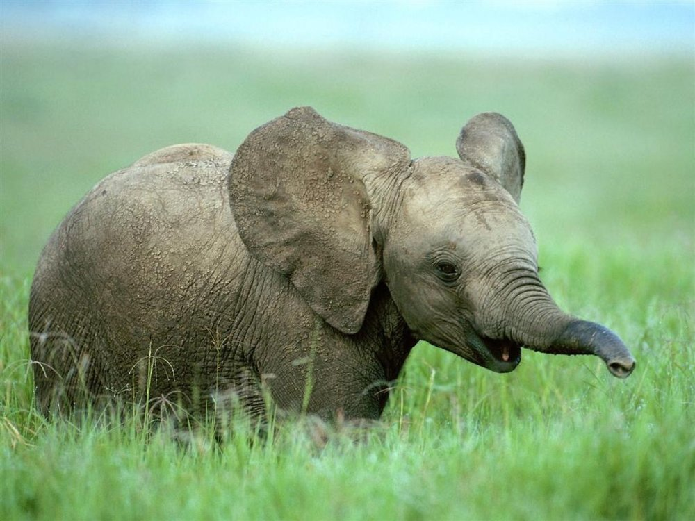 Elephant census 3.jpg