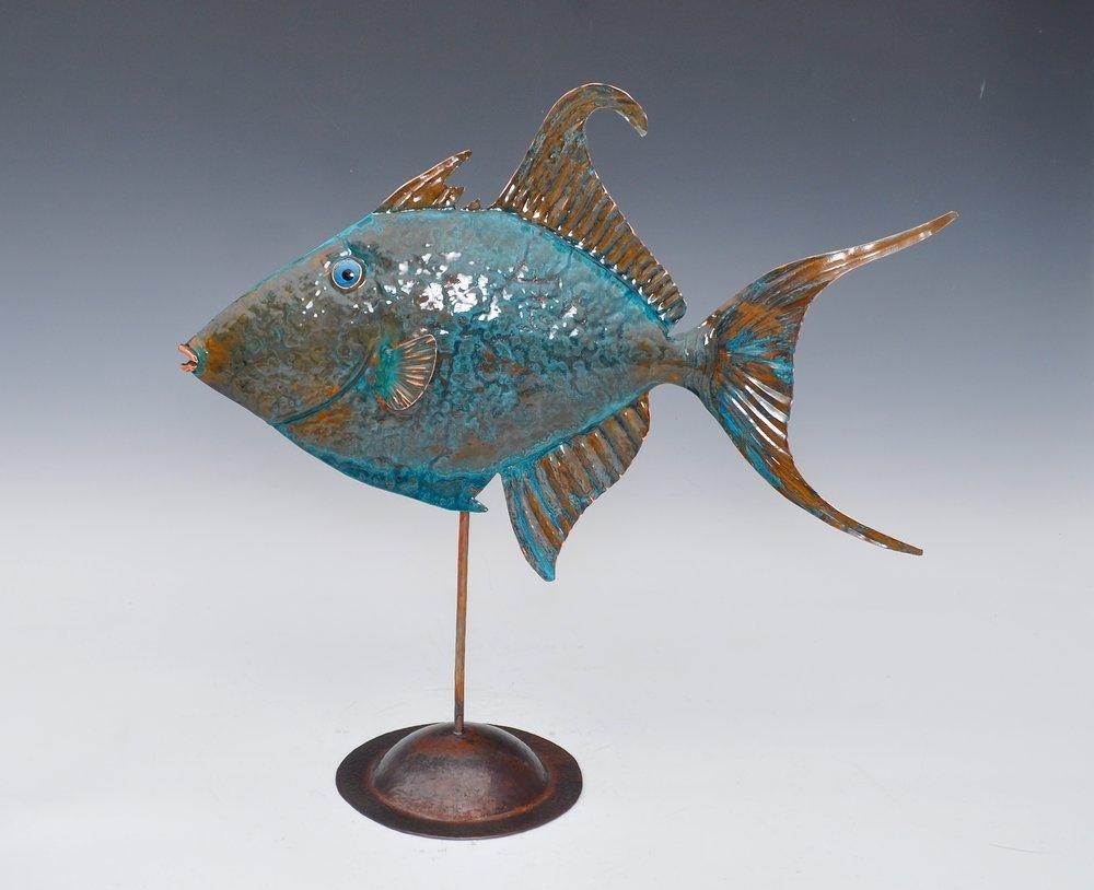 Queen Triggerfish Blue