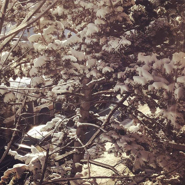 Trees right outside our office windows-winter is finally here.