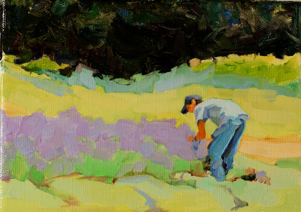 Picking Lavender. 5x7