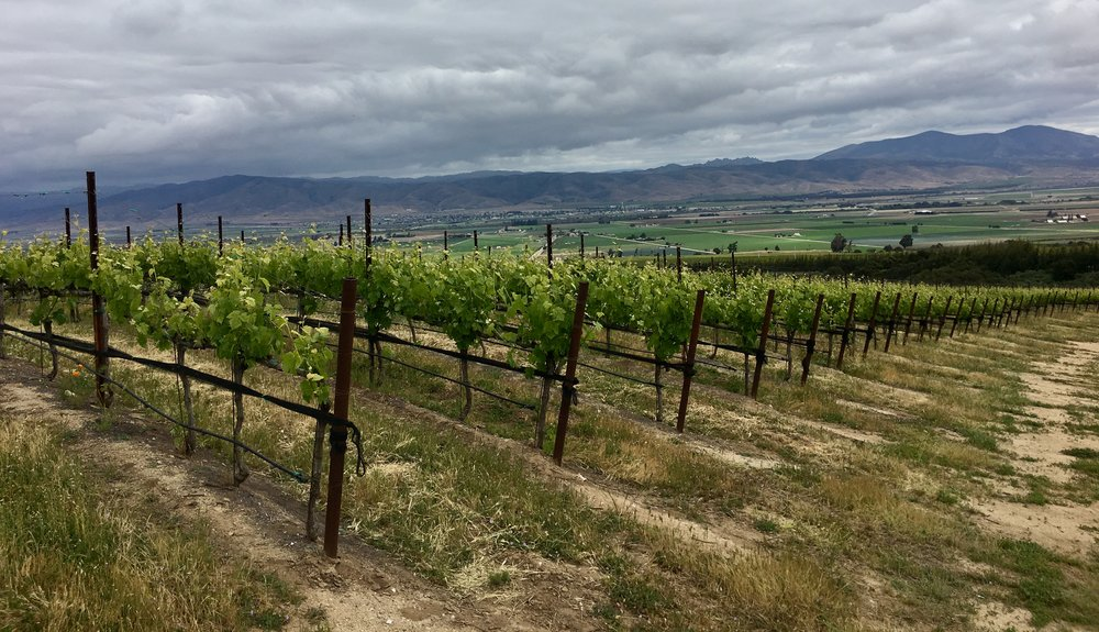 The Sierra Mar Syrah block above Salinas Valley